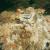 Deer Island – Demolición del Reformatorio y Fuerte Dawes Image #4